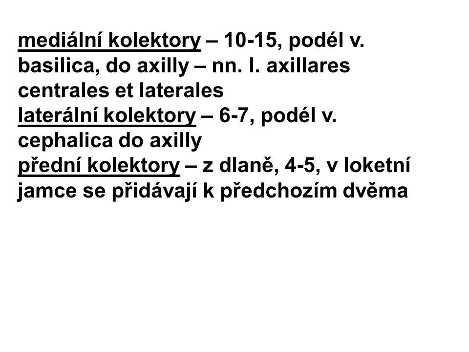 mediální kolektory – 10-15, podél v. basilica, do axilly – nn. l. axillares centrales et laterales laterální kolektory – 6-7, podél v. cephalica do ax