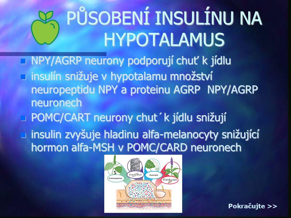 PŮSOBENÍ INSULÍNU NA HYPOTALAMUS NPY/AGRP neurony podporují chuť k jídlu NPY/AGRP neurony podporují chuť k jídlu insulín snižuje v hypotalamu množství neuropeptidu NPY a proteinu AGRP NPY/AGRP neuronech insulín snižuje v hypotalamu množství neuropeptidu NPY a proteinu AGRP NPY/AGRP neuronech POMC/CART neurony chut´k jídlu snižují POMC/CART neurony chut´k jídlu snižují insulin zvyšuje hladinu alfa-melanocyty snižující hormon alfa-MSH v POMC/CARD neuronech insulin zvyšuje hladinu alfa-melanocyty snižující hormon alfa-MSH v POMC/CARD neuronech Pokračujte >>