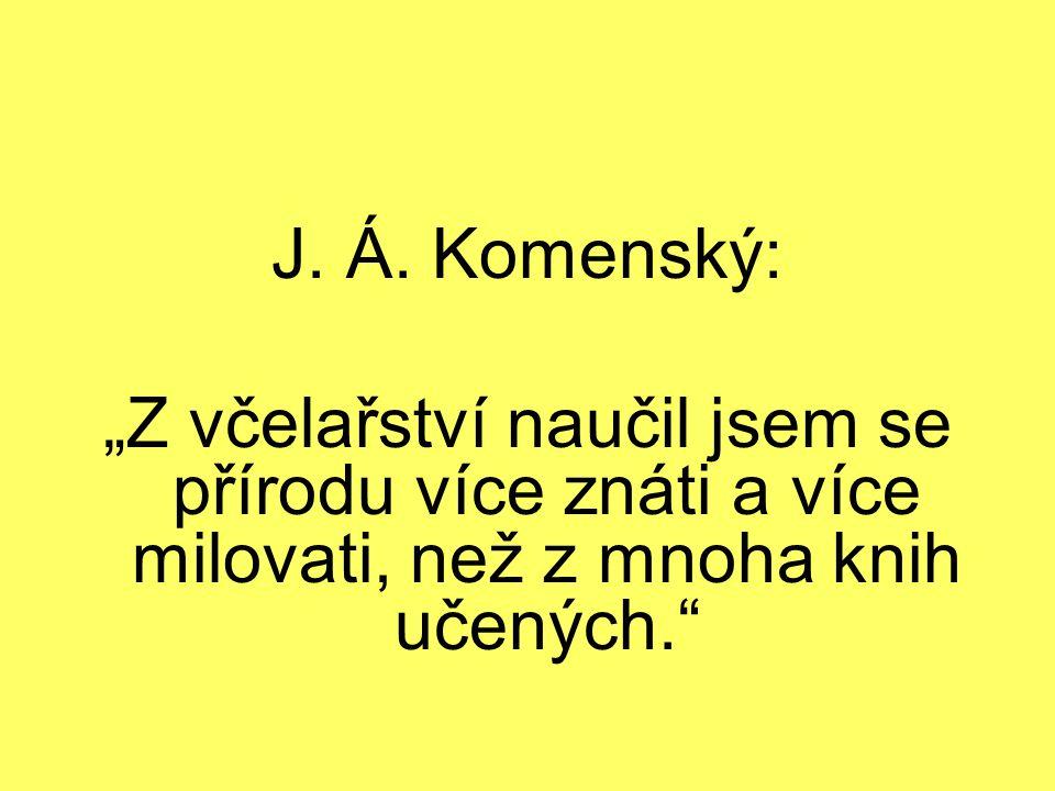 """J. Á. Komenský: """"Z včelařství naučil jsem se přírodu více znáti a více milovati, než z mnoha knih učených."""""""