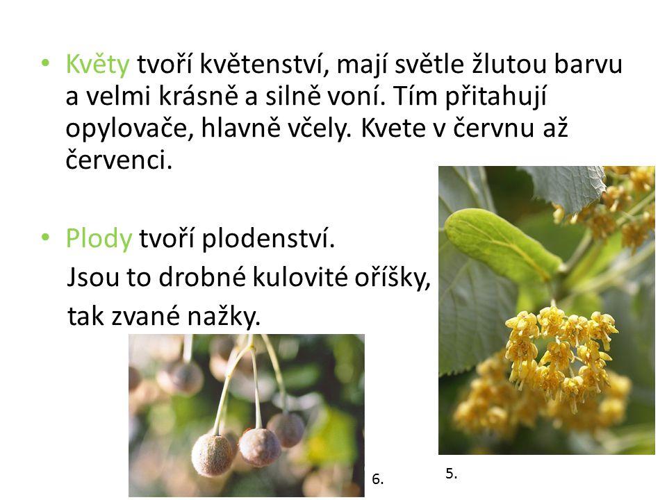 Květy tvoří květenství, mají světle žlutou barvu a velmi krásně a silně voní. Tím přitahují opylovače, hlavně včely. Kvete v červnu až červenci. Plody