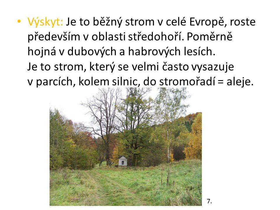 Výskyt: Je to běžný strom v celé Evropě, roste především v oblasti středohoří. Poměrně hojná v dubových a habrových lesích. Je to strom, který se velm