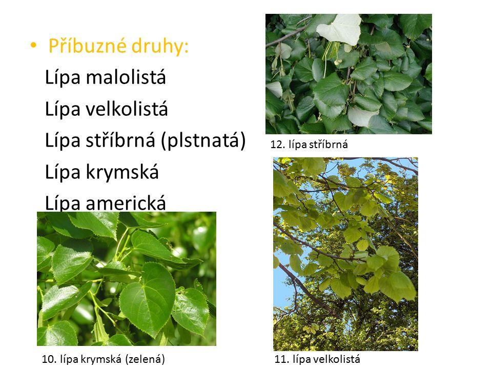 Úkol pro tebe Který druh lípy je označen ve Sloupu jako památný a chráněný strom.