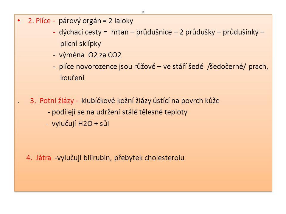 p 2. Plíce - párový orgán = 2 laloky - dýchací cesty = hrtan – průdušnice – 2 průdušky – průdušinky – plicní sklípky - výměna O2 za CO2 - plíce novoro