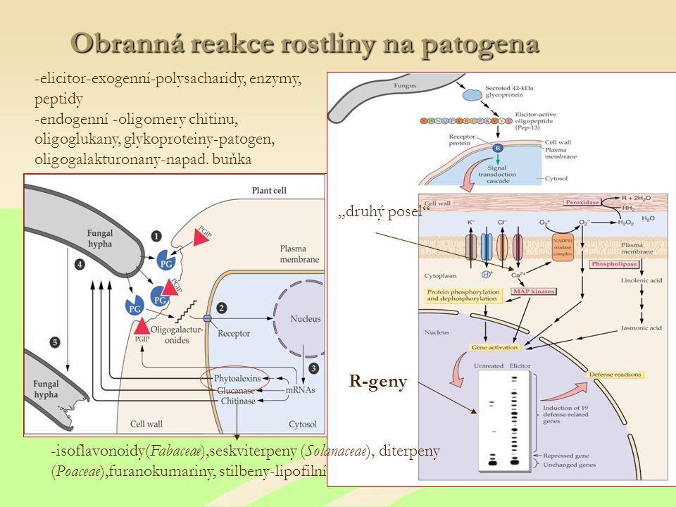 Obranná reakce rostliny na patogena -elicitor-exogenní-polysacharidy, enzymy, peptidy -endogenní -oligomery chitinu, oligoglukany, glykoproteiny-patogen, oligogalakturonany-napad.