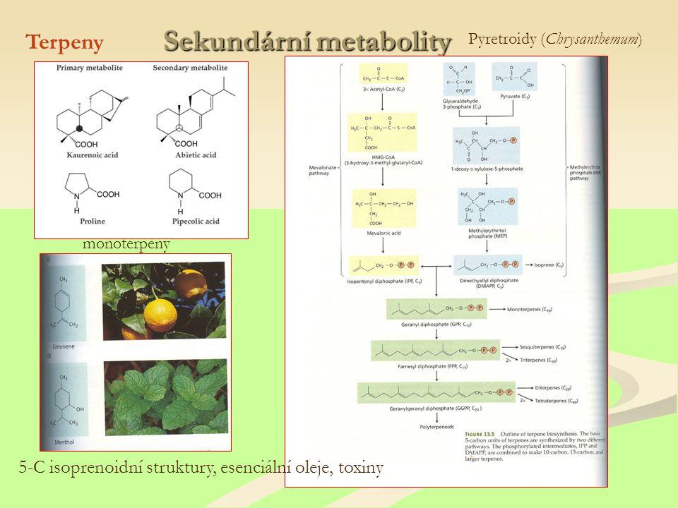 Sekundární metabolity Terpeny 5-C isoprenoidní struktury, esenciální oleje, toxiny monoterpeny Pyretroidy (Chrysanthemum)