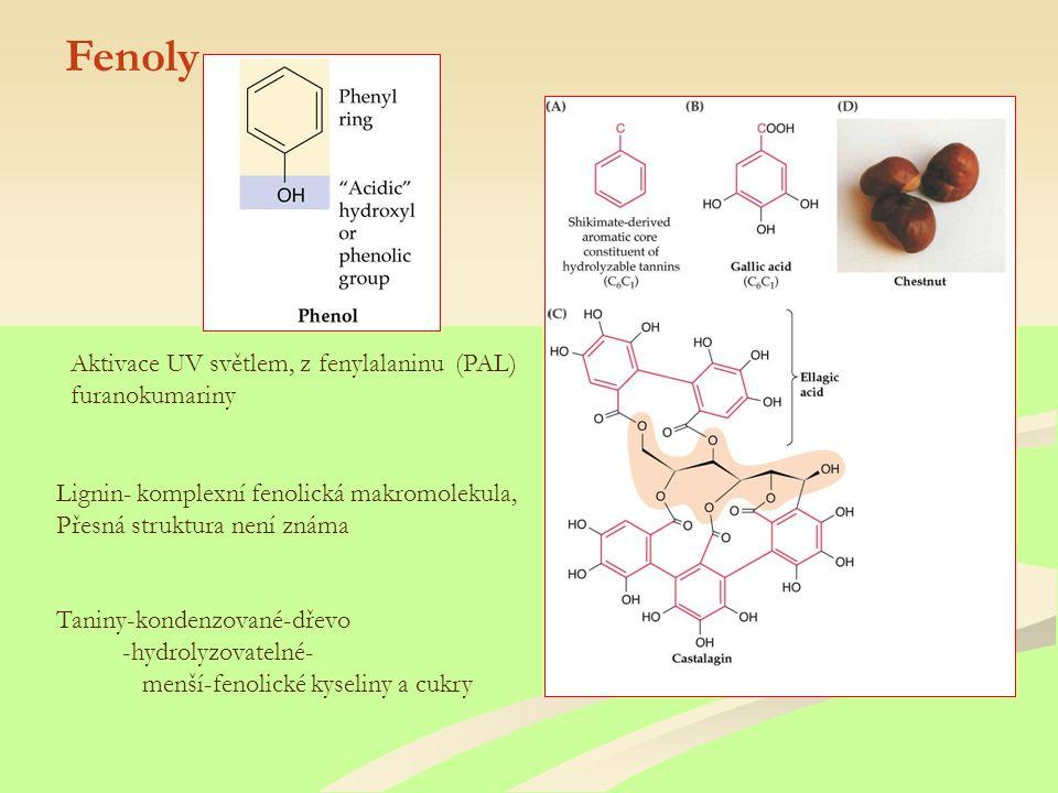 Fenoly Lignin- komplexní fenolická makromolekula, Přesná struktura není známa Taniny-kondenzované-dřevo -hydrolyzovatelné- menší-fenolické kyseliny a cukry Aktivace UV světlem, z fenylalaninu (PAL) furanokumariny