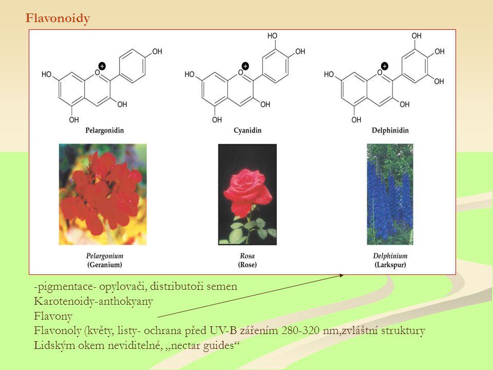 """Flavonoidy -pigmentace- opylovači, distributoři semen Karotenoidy-anthokyany Flavony Flavonoly (květy, listy- ochrana před UV-B zářením 280-320 nm,zvláštní struktury Lidským okem neviditelné, """"nectar guides"""