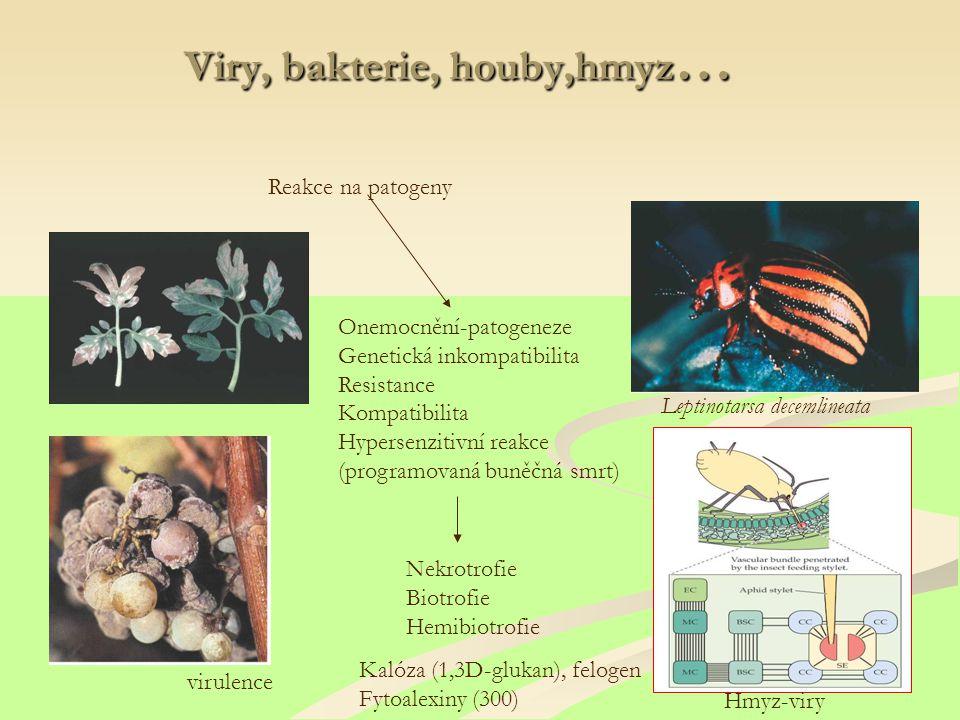 Viry, bakterie, houby,hmyz … Reakce na patogeny Nekrotrofie Biotrofie Hemibiotrofie Onemocnění-patogeneze Genetická inkompatibilita Resistance Kompatibilita Hypersenzitivní reakce (programovaná buněčná smrt) virulence Leptinotarsa decemlineata Hmyz-viry Kalóza (1,3D-glukan), felogen Fytoalexiny (300)