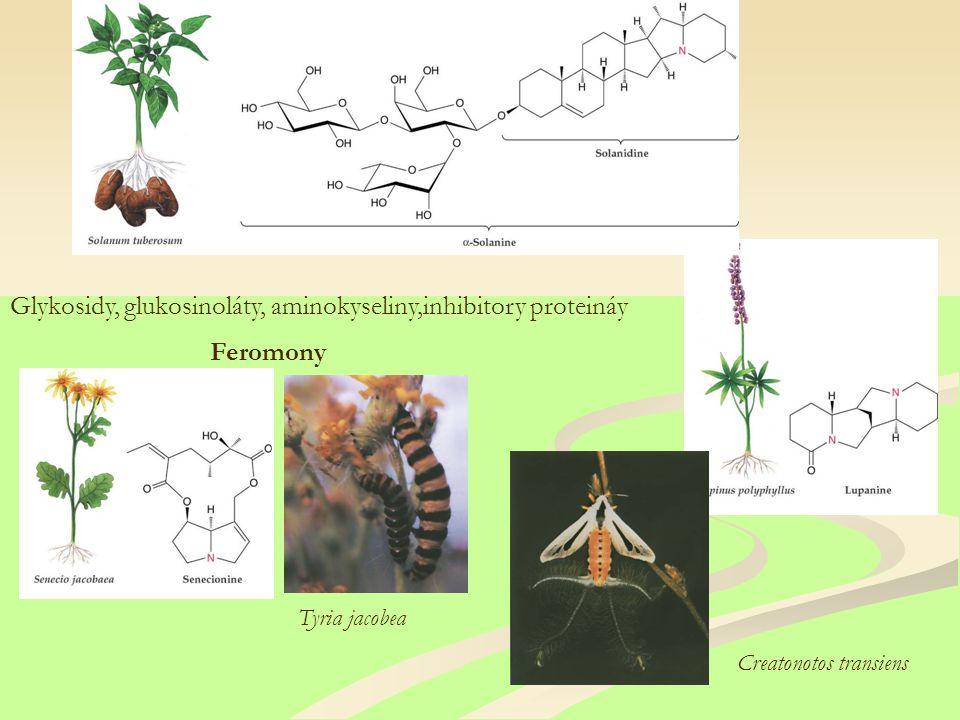 Feromony Glykosidy, glukosinoláty, aminokyseliny,inhibitory proteináy Tyria jacobea Creatonotos transiens