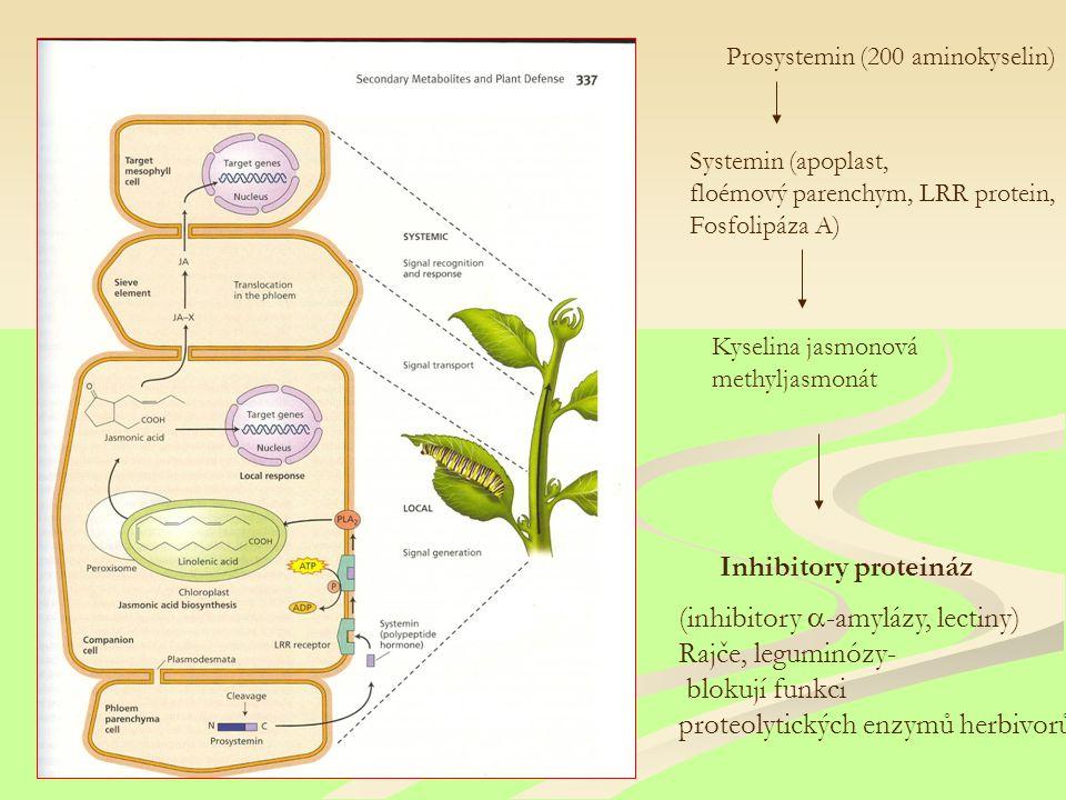 Kyselina jasmonová methyljasmonát Inhibitory proteináz Prosystemin (200 aminokyselin) Systemin (apoplast, floémový parenchym, LRR protein, Fosfolipáza A) (inhibitory  -amylázy, lectiny) Rajče, leguminózy- blokují funkci proteolytických enzymů herbivorů