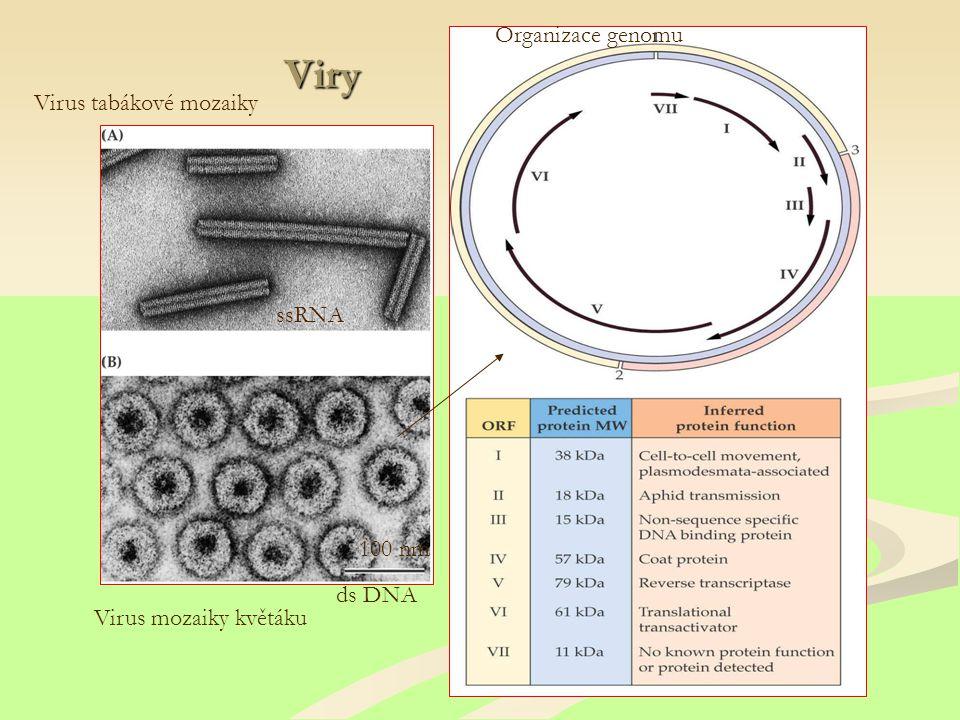 Viry Virus tabákové mozaiky Virus mozaiky květáku ssRNA ds DNA 100 nm Organizace genomu