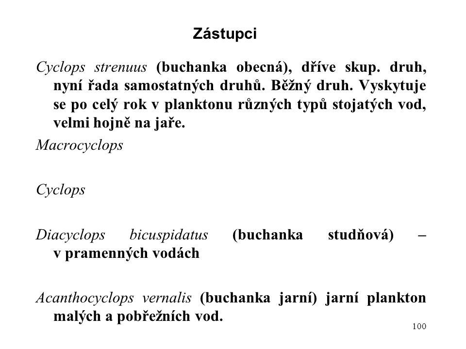 100 Zástupci Cyclops strenuus (buchanka obecná), dříve skup.