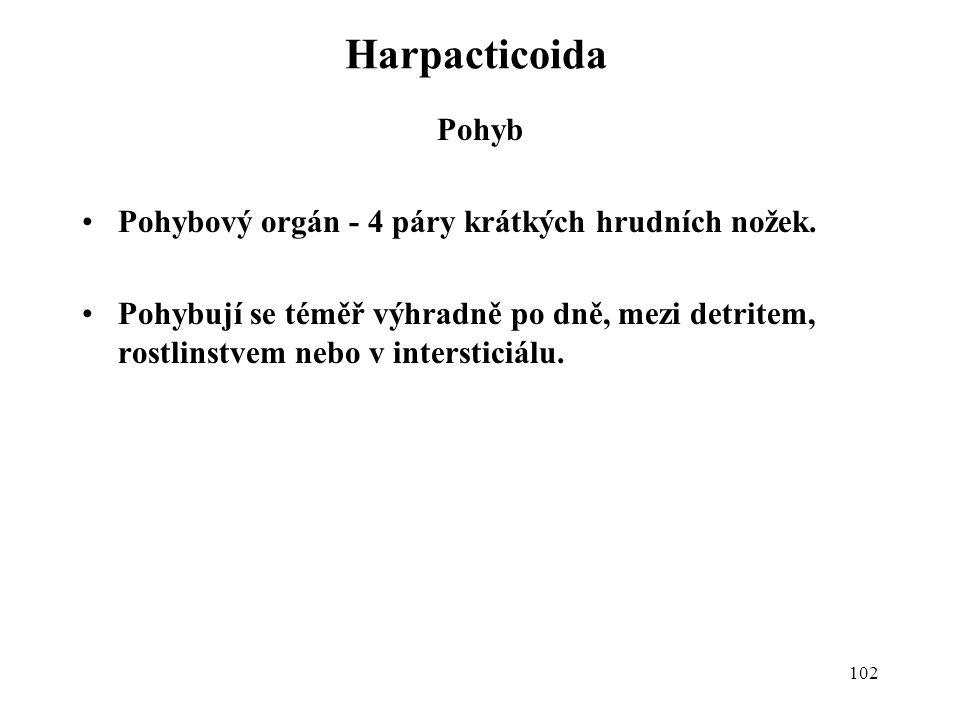 102 Harpacticoida Pohyb Pohybový orgán - 4 páry krátkých hrudních nožek. Pohybují se téměř výhradně po dně, mezi detritem, rostlinstvem nebo v interst