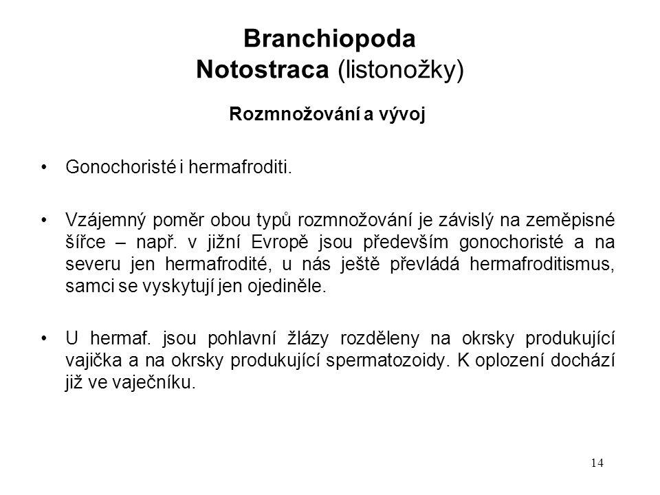 14 Rozmnožování a vývoj Gonochoristé i hermafroditi. Vzájemný poměr obou typů rozmnožování je závislý na zeměpisné šířce – např. v jižní Evropě jsou p
