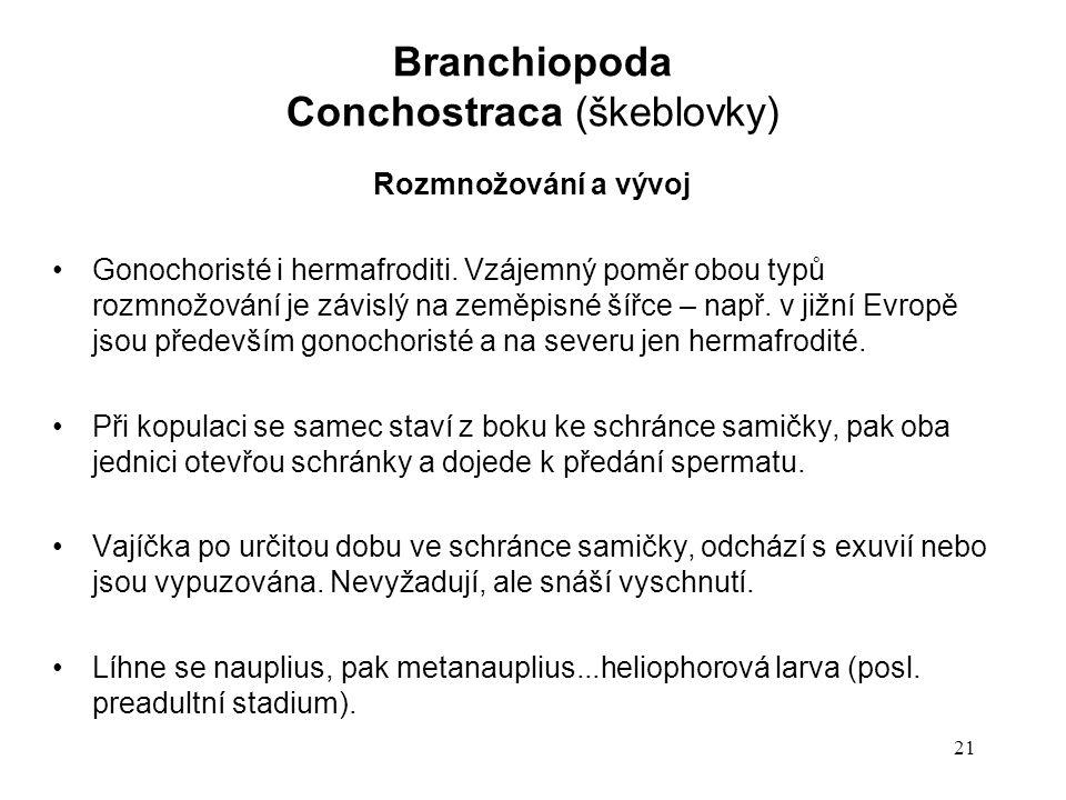 21 Rozmnožování a vývoj Gonochoristé i hermafroditi. Vzájemný poměr obou typů rozmnožování je závislý na zeměpisné šířce – např. v jižní Evropě jsou p