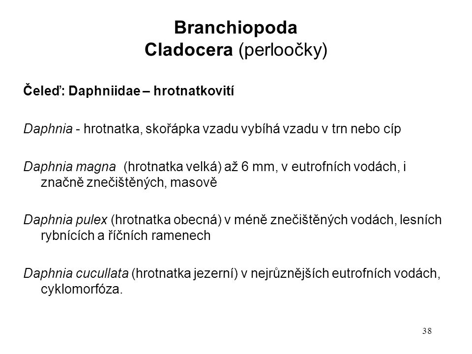 38 Čeleď: Daphniidae – hrotnatkovití Daphnia - hrotnatka, skořápka vzadu vybíhá vzadu v trn nebo cíp Daphnia magna (hrotnatka velká) až 6 mm, v eutrofních vodách, i značně znečištěných, masově Daphnia pulex (hrotnatka obecná) v méně znečištěných vodách, lesních rybnících a říčních ramenech Daphnia cucullata (hrotnatka jezerní) v nejrůznějších eutrofních vodách, cyklomorfóza.