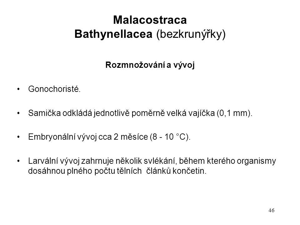 46 Rozmnožování a vývoj Gonochoristé. Samička odkládá jednotlivě poměrně velká vajíčka (0,1 mm). Embryonální vývoj cca 2 měsíce (8 - 10 °C). Larvální