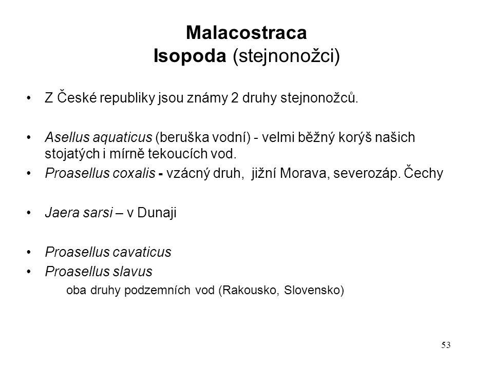 53 Z České republiky jsou známy 2 druhy stejnonožců.