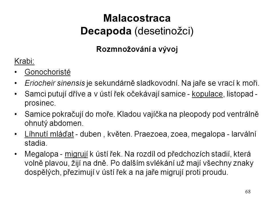 68 Krabi: Gonochoristé Eriocheir sinensis je sekundárně sladkovodní. Na jaře se vrací k moři. Samci putují dříve a v ústí řek očekávají samice - kopul