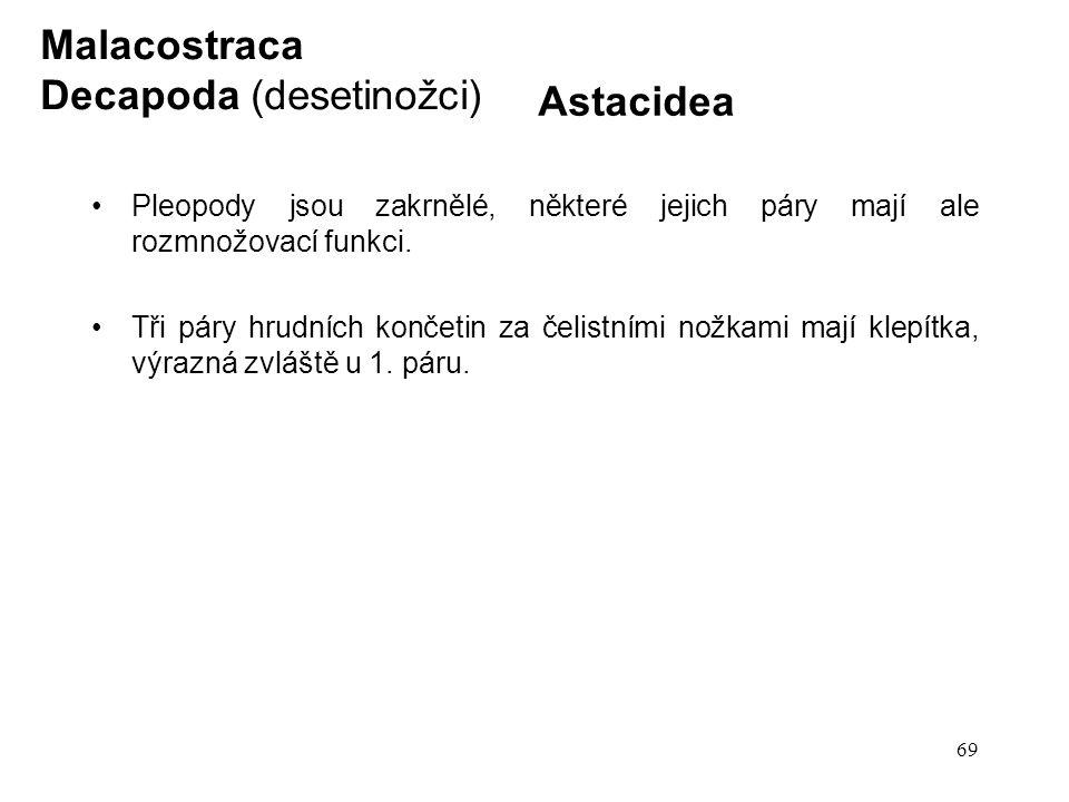 69 Astacidea Pleopody jsou zakrnělé, některé jejich páry mají ale rozmnožovací funkci. Tři páry hrudních končetin za čelistními nožkami mají klepítka,