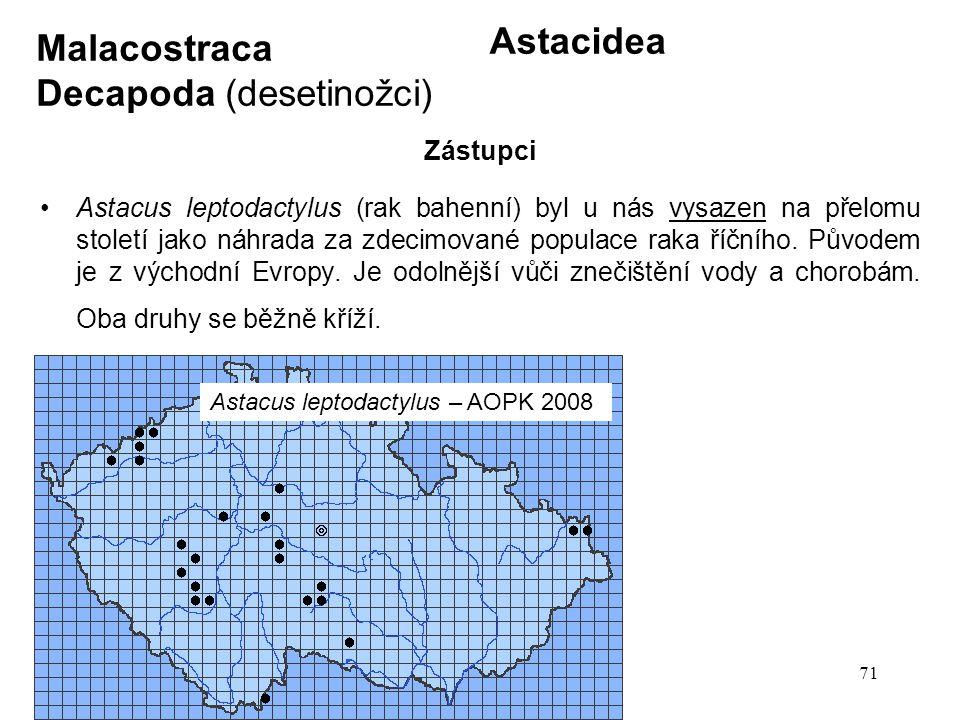 71 Astacidea Astacus leptodactylus (rak bahenní) byl u nás vysazen na přelomu století jako náhrada za zdecimované populace raka říčního. Původem je z