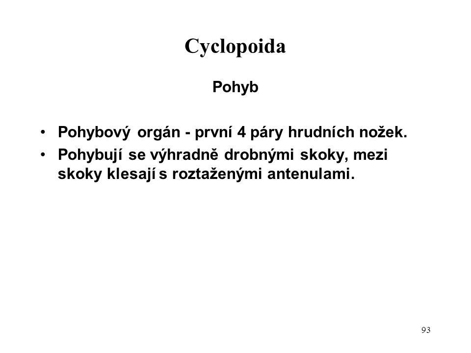 93 Cyclopoida Pohyb Pohybový orgán - první 4 páry hrudních nožek.