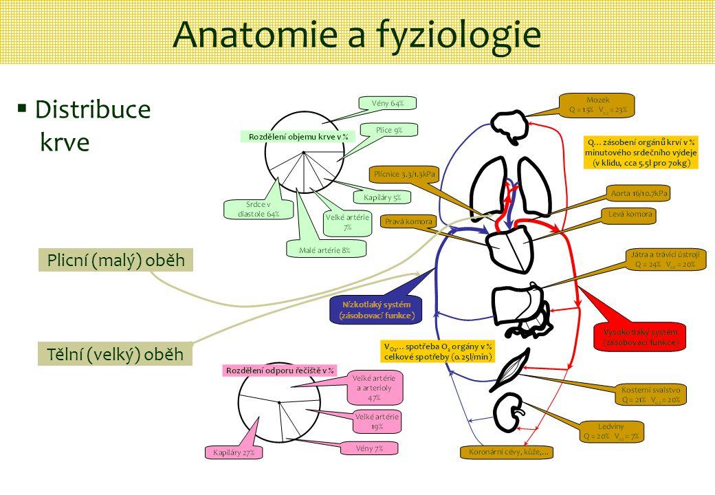 Anatomie a fyziologie Plicní (malý) oběh Tělní (velký) oběh  Distribuce krve