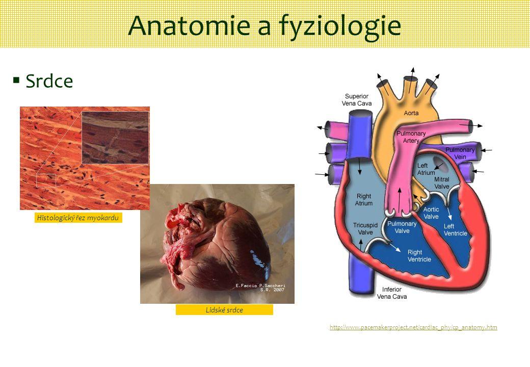 Anatomie a fyziologie  Srdce http://www.pacemakerproject.net/cardiac_phy/cp_anatomy.htm Histologický řez myokardu Lidské srdce