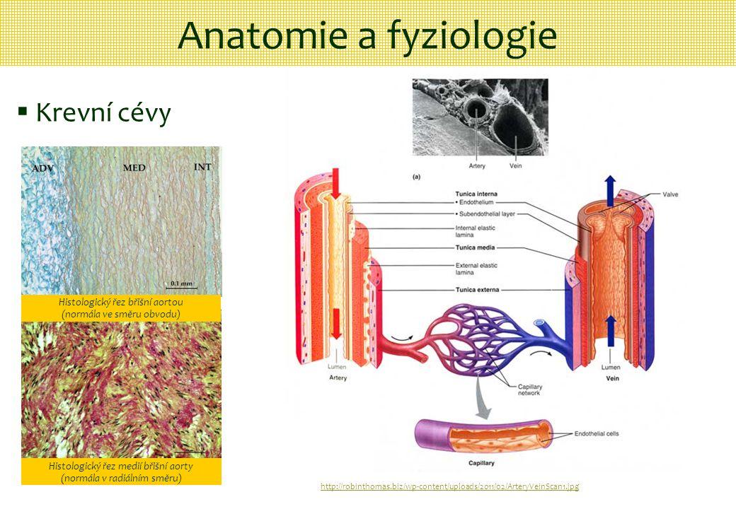http://robinthomas.biz/wp-content/uploads/2011/02/ArteryVeinScan1.jpg Anatomie a fyziologie  Krevní cévy Histologický řez břišní aortou (normála ve s