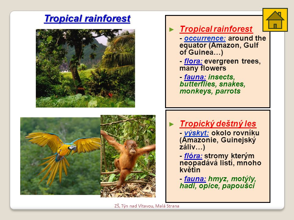 ► ► Tropický deštný les - výskyt: okolo rovníku (Amazonie, Guinejský záliv…) - flóra: stromy kterým neopadává listí, mnoho květin - fauna: hmyz, motýly, hadi, opice, papoušci ► ► Tropical rainforest - occurrence: around the equator (Amazon, Gulf of Guinea…) - flora: evergreen trees, many flowers - fauna: insects, butterflies, snakes, monkeys, parrots Tropical rainforest