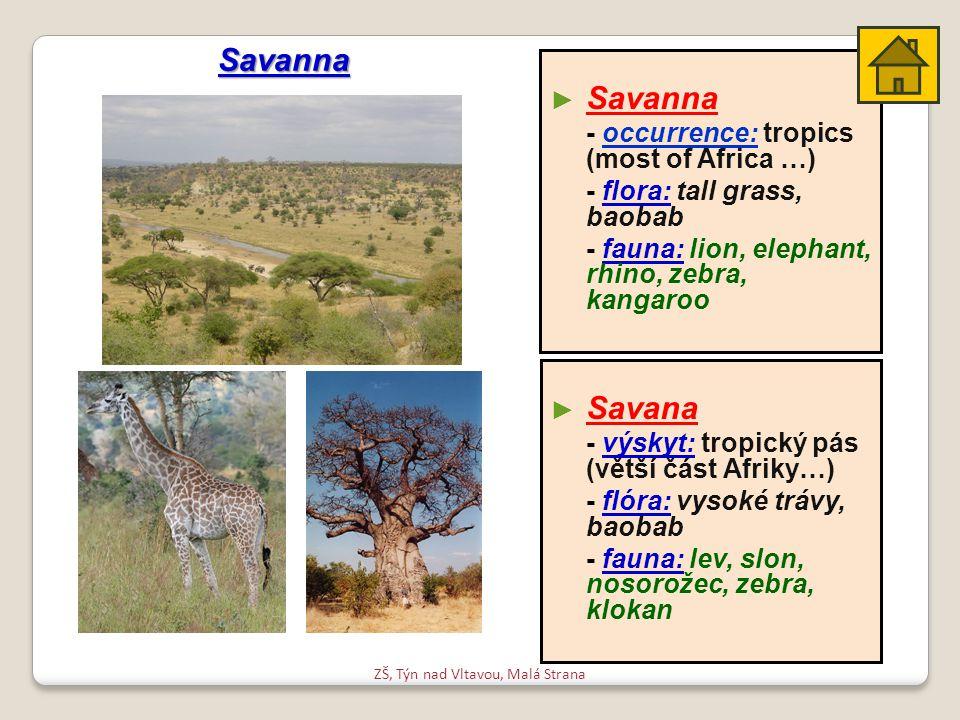 ZŠ, Týn nad Vltavou, Malá Strana ► ► Savana - výskyt: tropický pás (větší část Afriky…) - flóra: vysoké trávy, baobab - fauna: lev, slon, nosorožec, zebra, klokan ► ► Savanna - occurrence: tropics (most of Africa …) - flora: tall grass, baobab - fauna: lion, elephant, rhino, zebra, kangaroo Savanna