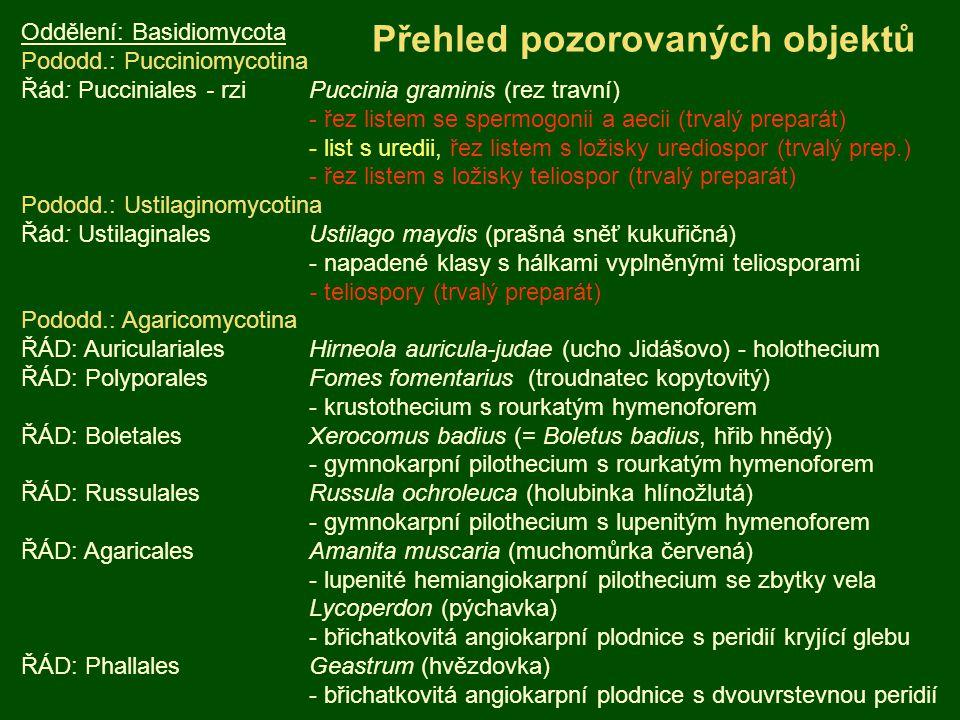 Oddělení: Basidiomycota Pododd.: Pucciniomycotina Řád: Pucciniales - rziPuccinia graminis (rez travní) - řez listem se spermogonii a aecii (trvalý preparát) - list s uredii, řez listem s ložisky urediospor (trvalý prep.) - řez listem s ložisky teliospor (trvalý preparát) Pododd.: Ustilaginomycotina Řád: Ustilaginales Ustilago maydis (prašná sněť kukuřičná) - napadené klasy s hálkami vyplněnými teliosporami - teliospory (trvalý preparát) Pododd.: Agaricomycotina ŘÁD: AuricularialesHirneola auricula-judae (ucho Jidášovo) - holothecium ŘÁD: Polyporales Fomes fomentarius (troudnatec kopytovitý) - krustothecium s rourkatým hymenoforem ŘÁD: Boletales Xerocomus badius (= Boletus badius, hřib hnědý) - gymnokarpní pilothecium s rourkatým hymenoforem ŘÁD: RussulalesRussula ochroleuca (holubinka hlínožlutá) - gymnokarpní pilothecium s lupenitým hymenoforem ŘÁD: Agaricales Amanita muscaria (muchomůrka červená) - lupenité hemiangiokarpní pilothecium se zbytky vela Lycoperdon (pýchavka) - břichatkovitá angiokarpní plodnice s peridií kryjící glebu ŘÁD: Phallales Geastrum (hvězdovka) - břichatkovitá angiokarpní plodnice s dvouvrstevnou peridií Přehled pozorovaných objektů