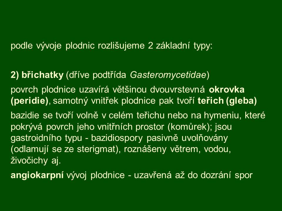 podle vývoje plodnic rozlišujeme 2 základní typy: 2) břichatky (dříve podtřída Gasteromycetidae) povrch plodnice uzavírá většinou dvouvrstevná okrovka (peridie), samotný vnitřek plodnice pak tvoří teřich (gleba) bazidie se tvoří volně v celém teřichu nebo na hymeniu, které pokrývá povrch jeho vnitřních prostor (komůrek); jsou gastroidního typu - bazidiospory pasivně uvolňovány (odlamují se ze sterigmat), roznášeny větrem, vodou, živočichy aj.