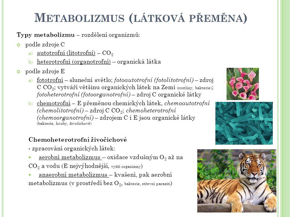 M ETABOLIZMUS ( LÁTKOVÁ PŘEMĚNA ) Typy metabolizmu – rozdělení organizmů: podle zdroje C a) autotrofní (litotrofní) – CO 2 b) heterotrofní (organotrofní) – organická látka podle zdroje E a) fototrofní – sluneční světlo; fotoautotrofní (fotolitotrofní) – zdroj C CO 2 ; vytváří většinu organických látek na Zemi (rostliny, bakterie) ; fotoheterotrofní (fotoorganotrofní) – zdroj C organické látky b) chemotrofní – E přeměnou chemických látek, chemoautotrofní (chemolitotrofní) – zdroj C CO 2 ; chemoheterotrofní (chemoorganotrofní) – zdrojem C i E jsou organické látky (bakterie, houby, živočichové) Chemoheterotrofní živočichové - zpracování organických látek: aerobní metabolizmus – oxidace vzdušným O 2 až na CO 2 a vodu (E nejvýhodnější, vyšší organizmy ) anaerobní metabolizmus – kvašení, pak aerobní metabolizmus (v prostředí bez O 2, bakterie, střevní paraziti )