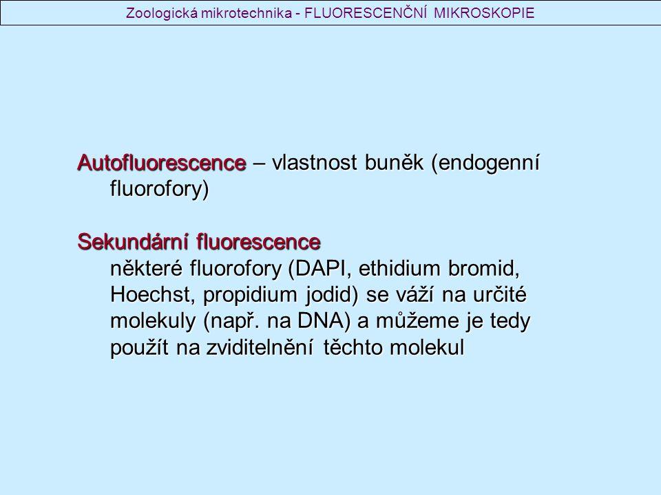 Autofluorescence – vlastnost buněk (endogenní fluorofory) Sekundární fluorescence některé fluorofory (DAPI, ethidium bromid, Hoechst, propidium jodid)