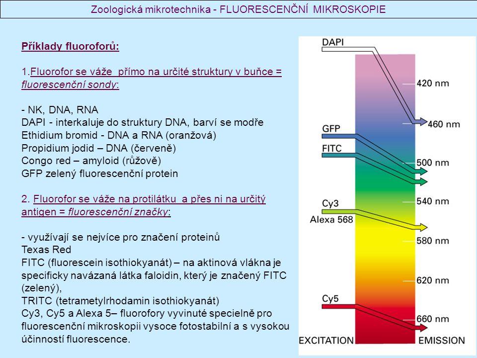 Příklady fluoroforů: 1.Fluorofor se váže přímo na určité struktury v buňce = fluorescenční sondy: - NK, DNA, RNA DAPI - interkaluje do struktury DNA,
