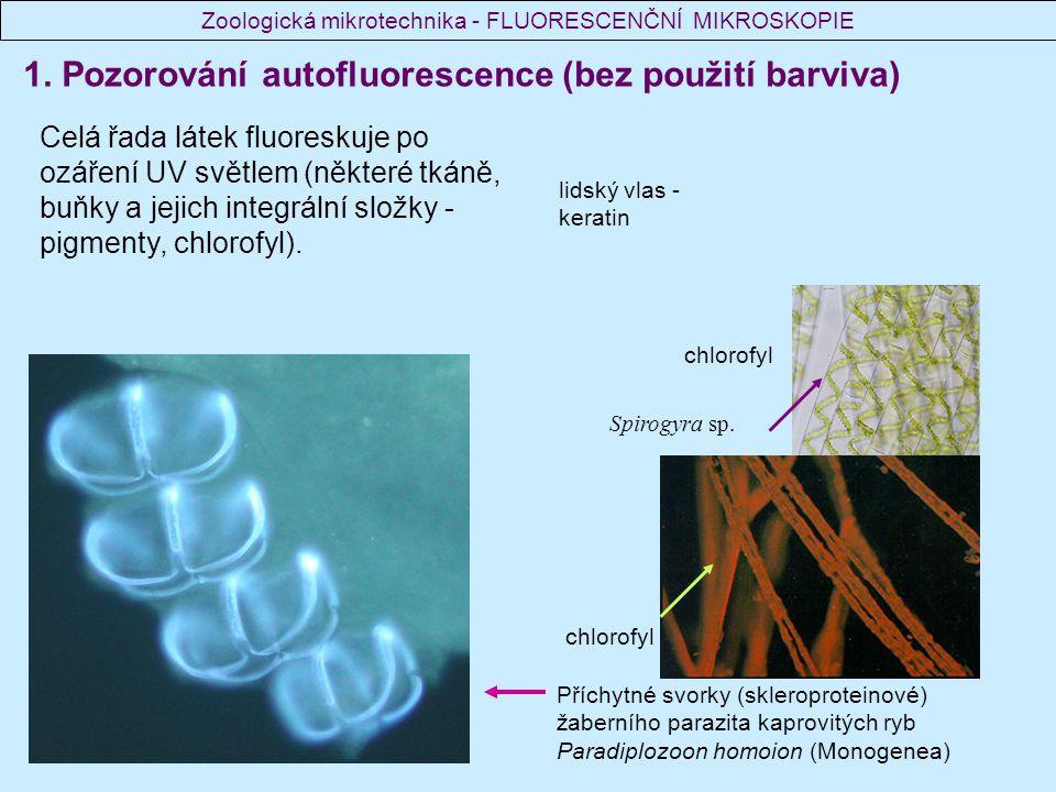 1. Pozorování autofluorescence (bez použití barviva) Celá řada látek fluoreskuje po ozáření UV světlem (některé tkáně, buňky a jejich integrální složk