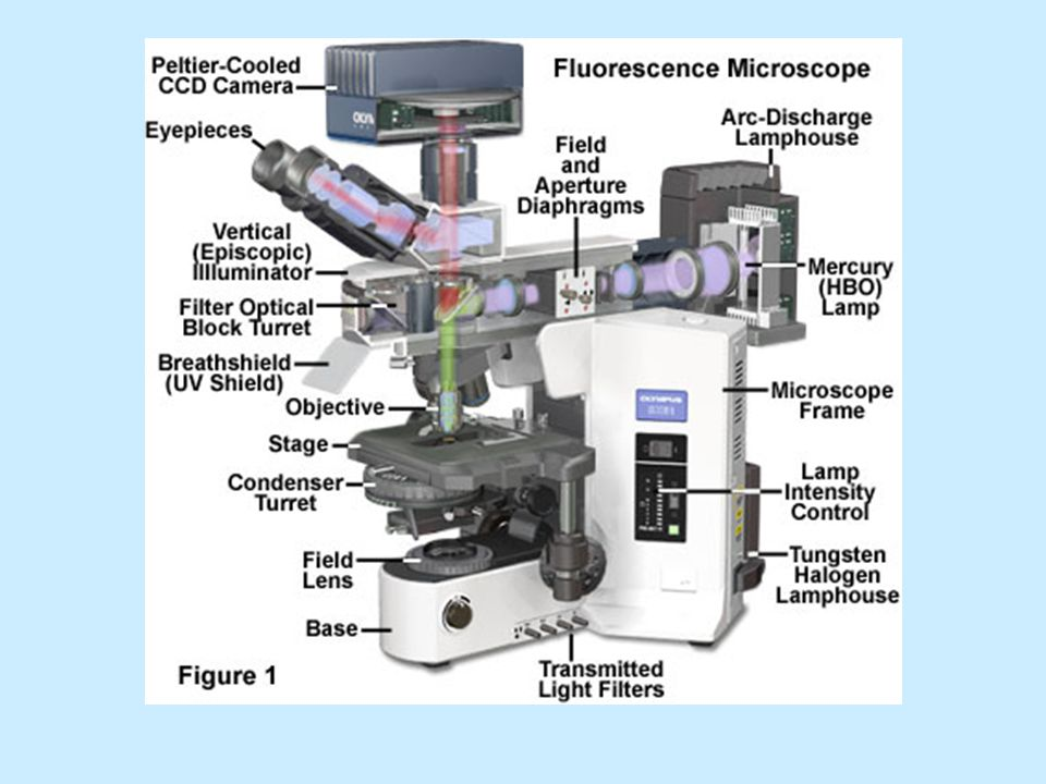 1 2 3 4 5 6 1- schránka s výbojkou 2 - iluminátor 3 - okulár 4 - kazeta na kostky s filtry 5 - objektiv 6 - univerzální kondenzor Schéma fluorescenčního mikroskopu