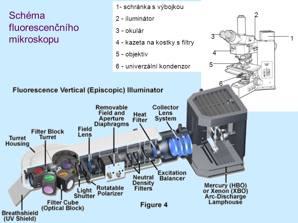 1 2 3 4 5 6 1- schránka s výbojkou 2 - iluminátor 3 - okulár 4 - kazeta na kostky s filtry 5 - objektiv 6 - univerzální kondenzor Schéma fluorescenční