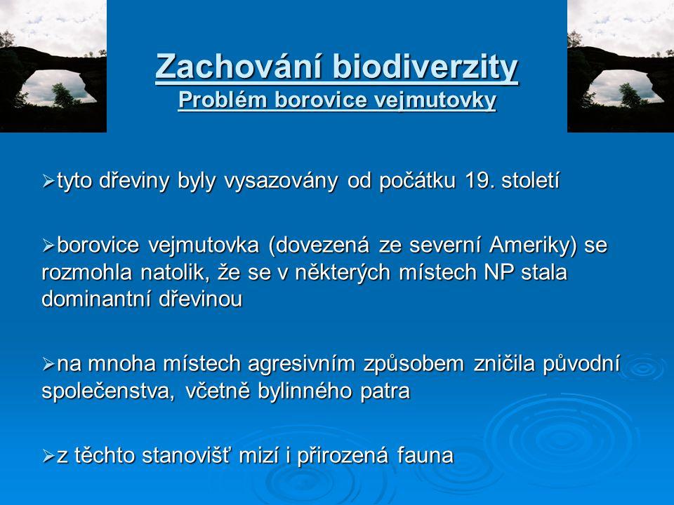 Zachování biodiverzity Problém borovice vejmutovky  tyto dřeviny byly vysazovány od počátku 19. století  borovice vejmutovka (dovezená ze severní Am