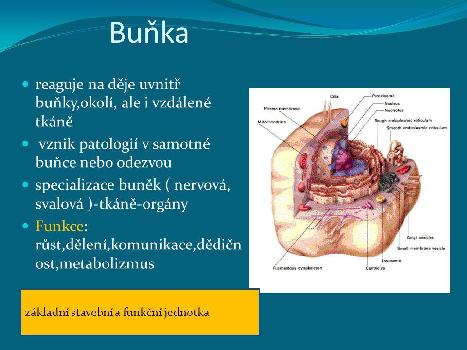 Buňka reaguje na děje uvnitř buňky,okolí, ale i vzdálené tkáně vznik patologií v samotné buňce nebo odezvou specializace buněk ( nervová, svalová )-tkáně-orgány Funkce: růst,dělení,komunikace,dědičn ost,metabolizmus základní stavební a funkční jednotka