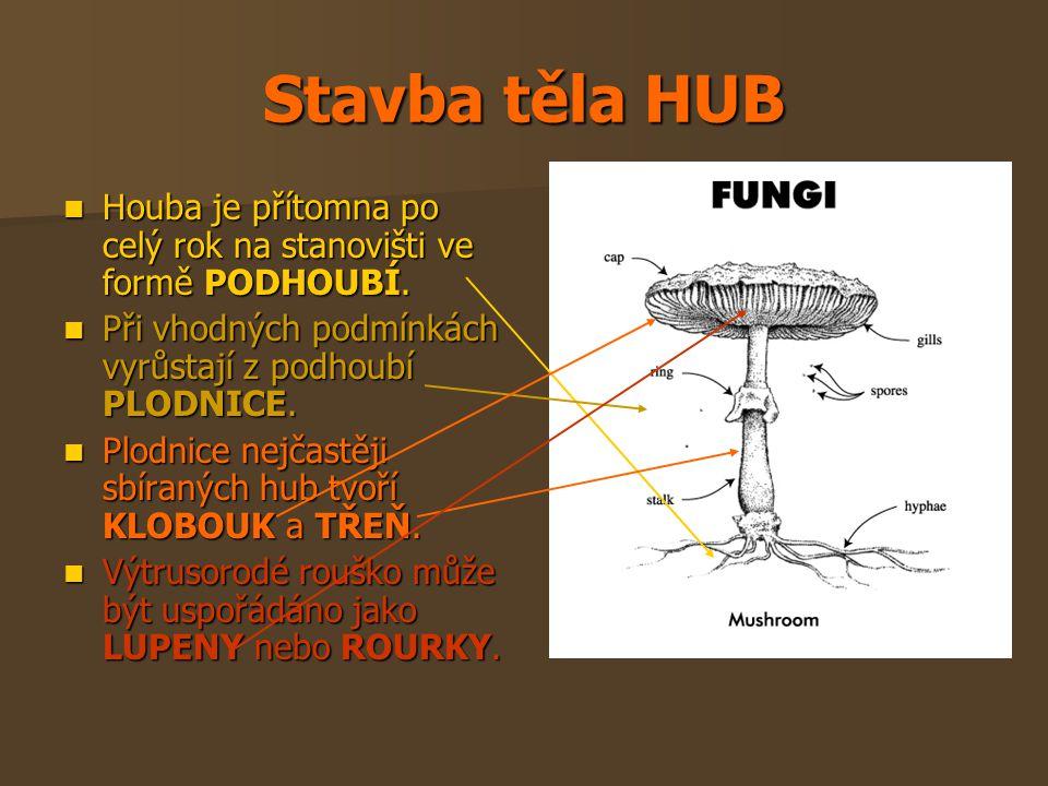 Stavba těla HUB Houba je přítomna po celý rok na stanovišti ve formě PODHOUBÍ. Houba je přítomna po celý rok na stanovišti ve formě PODHOUBÍ. Při vhod
