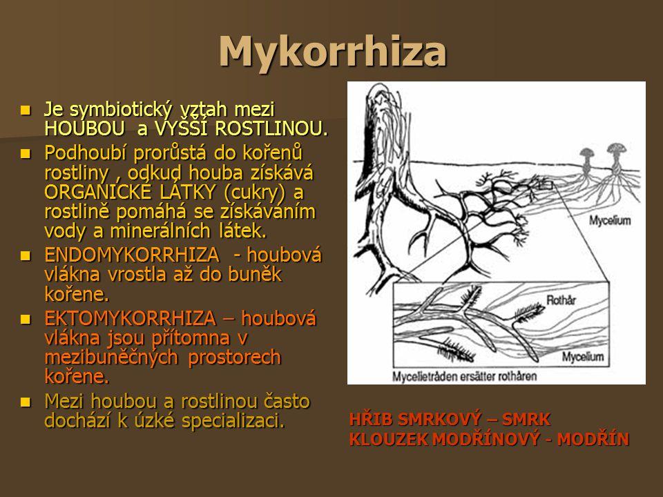 Mykorrhiza Je symbiotický vztah mezi HOUBOU a VYŠŠÍ ROSTLINOU. Je symbiotický vztah mezi HOUBOU a VYŠŠÍ ROSTLINOU. Podhoubí prorůstá do kořenů rostlin