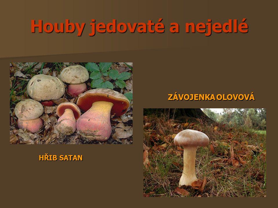 Houby jedovaté a nejedlé HŘIB SATAN ZÁVOJENKA OLOVOVÁ