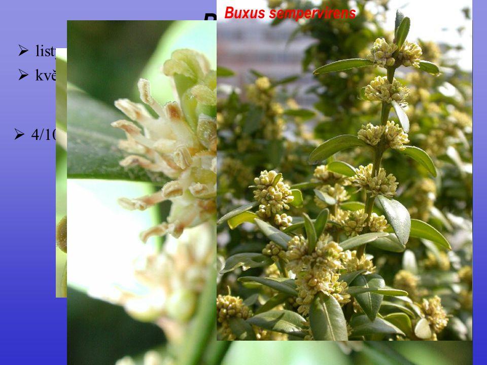  květy nenápadné, neúplné, jednopohlavné Buxales  4/100; vždyzelené dřeviny, široký areál od mírného pásma do tropů  listy celokrajné Buxaceae Buxu