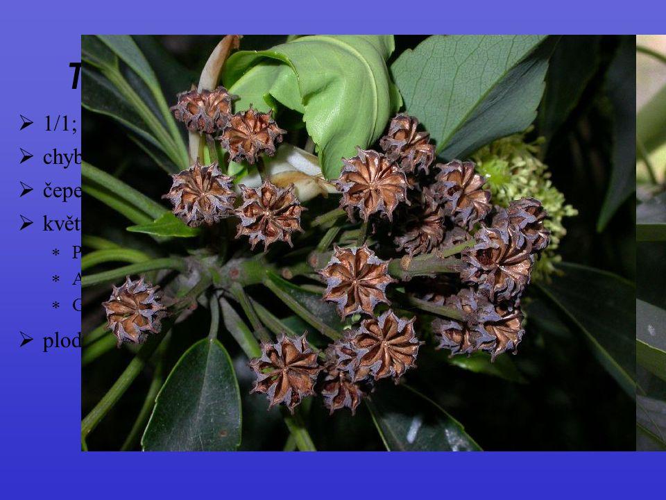 Trochodendrales, Trochodendraceae  1/1; východní Asie; stálezelené stromky  květy oboupohlavné, entomo až anemogamní  P ± chybí (pokud to nejsou li