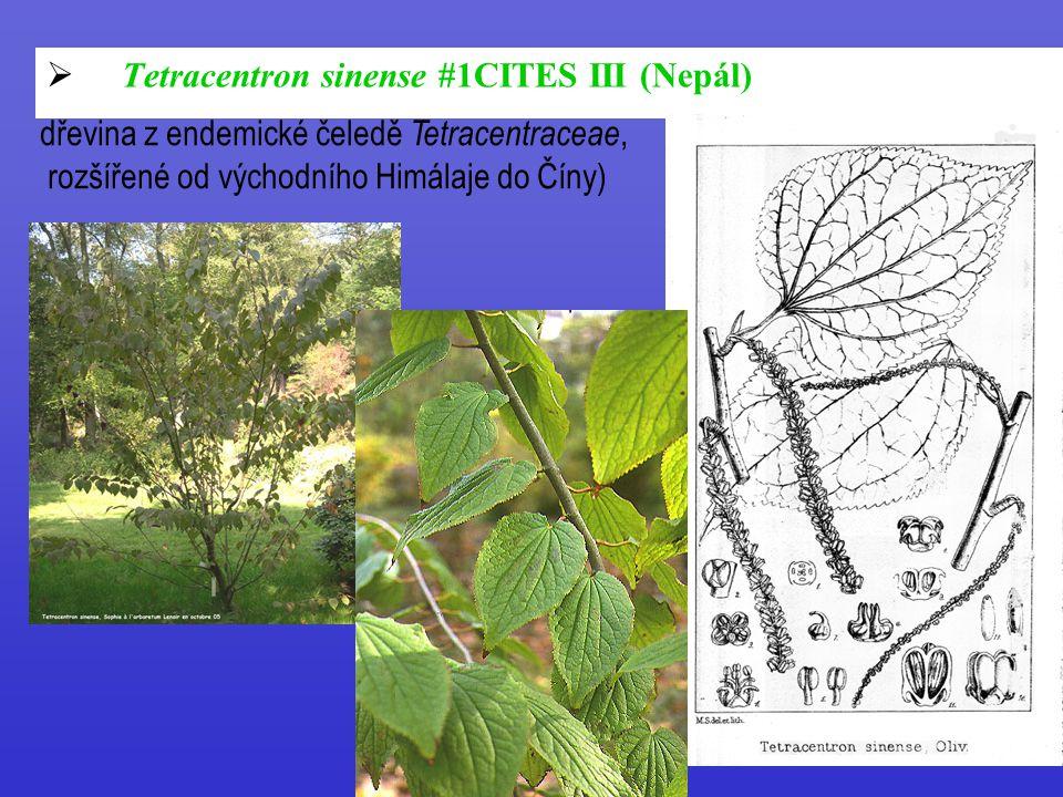  Tetracentron sinense #1CITES III (Nepál) dřevina z endemické čeledě Tetracentraceae, rozšířené od východního Himálaje do Číny)
