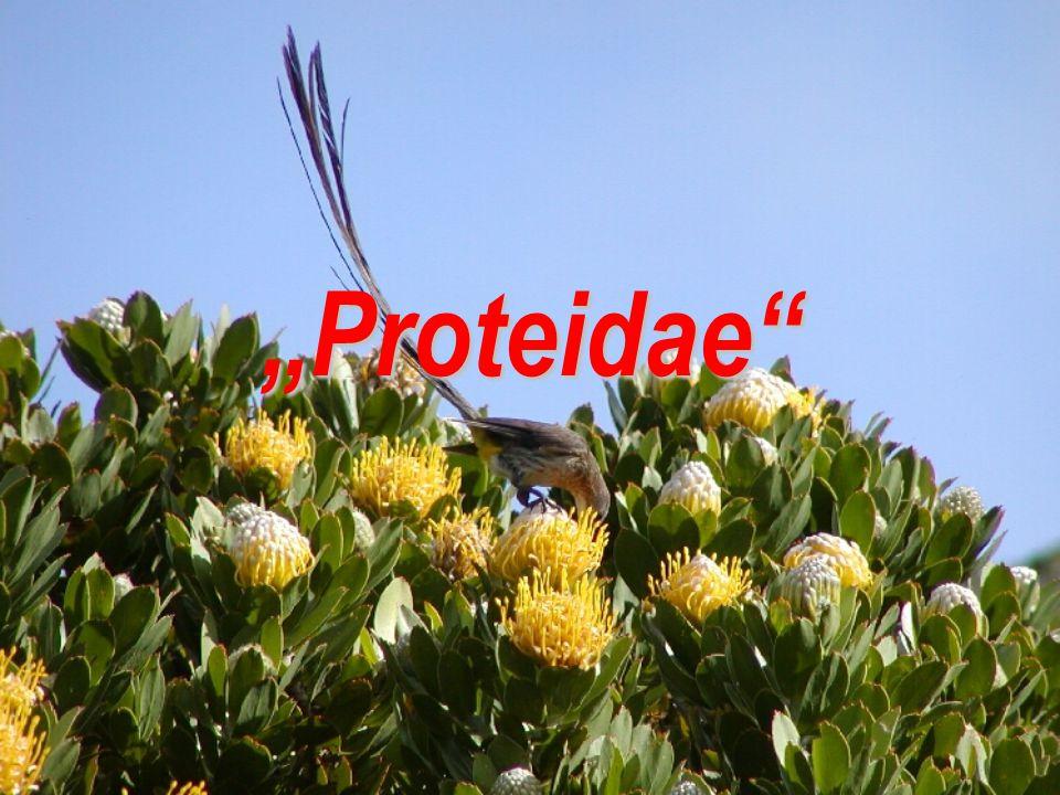 """Proteidae"""