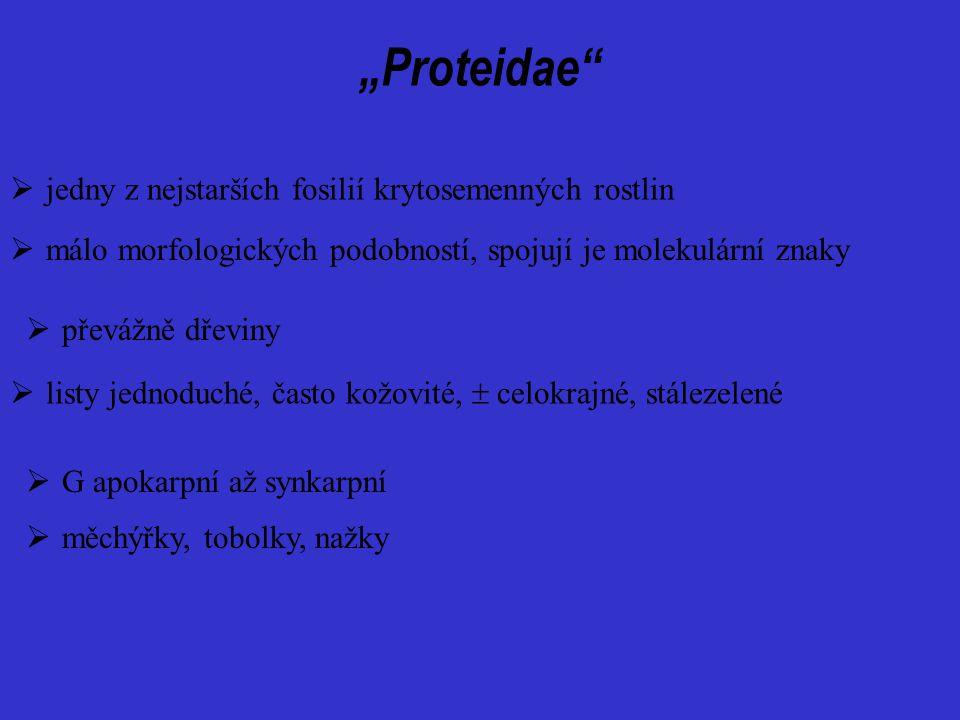 """""""Proteidae""""  převážně dřeviny  G apokarpní až synkarpní  listy jednoduché, často kožovité,  celokrajné, stálezelené  měchýřky, tobolky, nažky  j"""