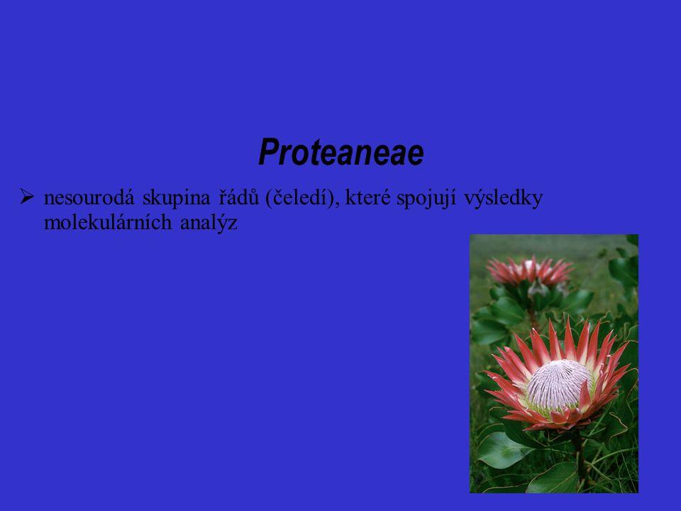 Proteaneae  nesourodá skupina řádů (čeledí), které spojují výsledky molekulárních analýz